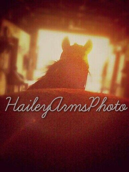 My horse ? ♡ Inspiration Nature Horses EyeEm Best Shots