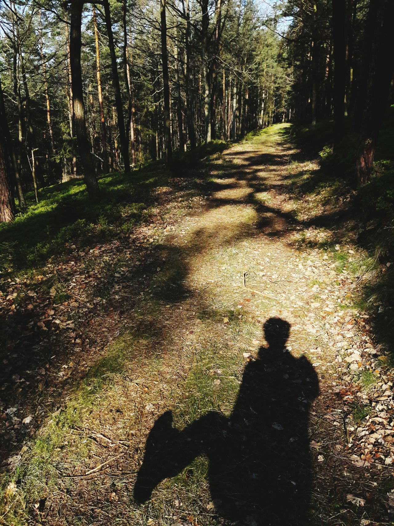 Forest Walking Shadow Nature Path