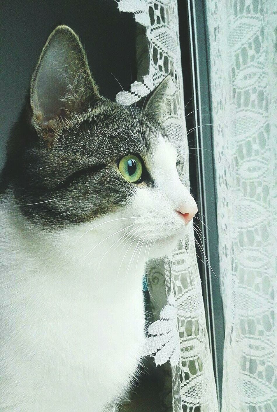 His name is Nisse, and he has Amazing Eyes <3 Cat Catlady Meow Greeneyes Cateyes Window Stare Animal Photography PhonePhotography Focused Catlovers Nopeople Deepeyes
