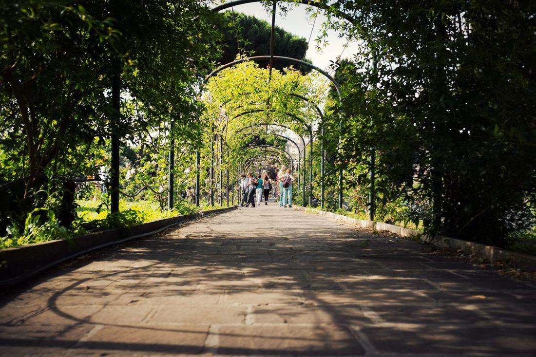 Rose garden // Priime Priimephoto Fuji X100s X100S FUJIFILM X100S Rose🌹 Roses Rose Garden Archs Arch