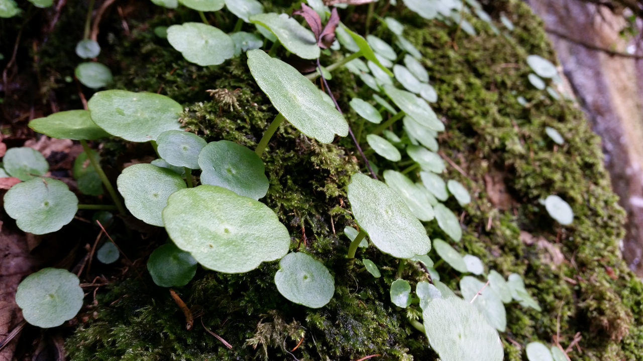 Close-Up Of Plants Growing On Mossy Field