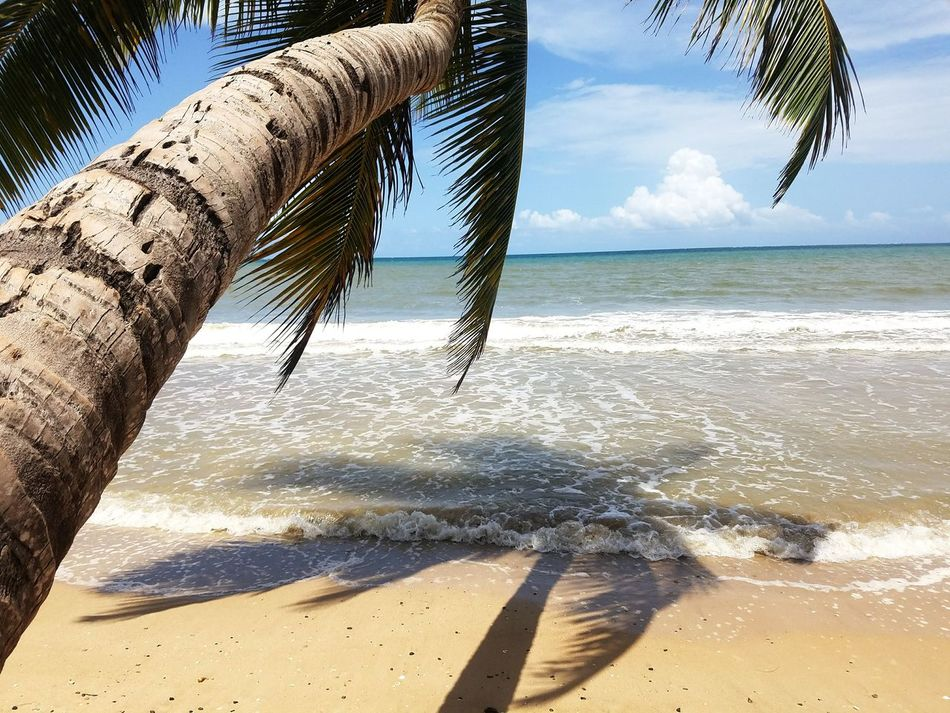 Beautiful stock photos of puerto rico, Beach, Beauty In Nature, Cloud - Sky, Coconut Palm Tree