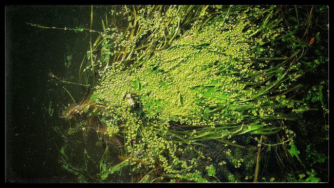 Nature No People Dnipro 🌊 Bartolomeo