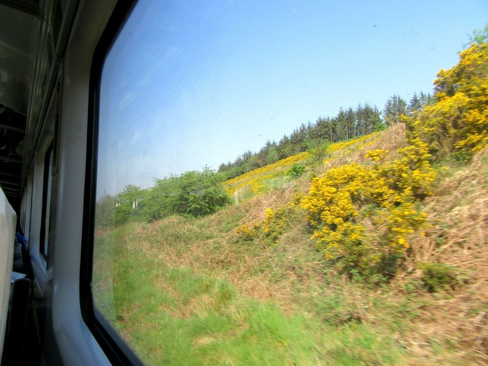 View from the train Train Ride View From The Train Trains_r_the_best Irish Rail Ireland