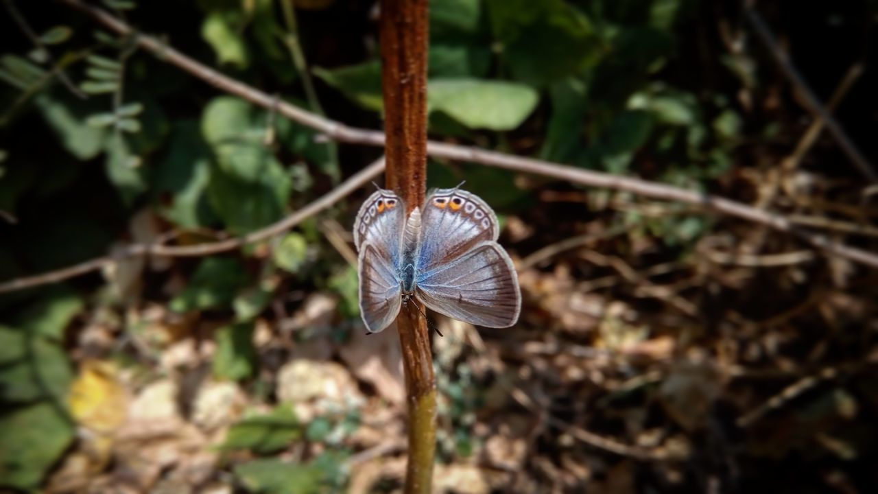One Animal Animal Themes Insect Animals In The Wild Close-up Outdoors Nature Animal Wildlife Beauty In Nature No People Fragility Day Common Blue Butterfly POLYOMMATUS ICARUS Butterfly Butterfly - Insect