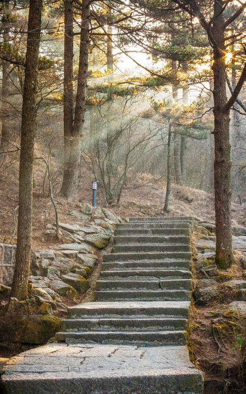 Yellow Mountains China Day Forest Nature No People Outdoors Staircase Steps Steps And Staircases Tree