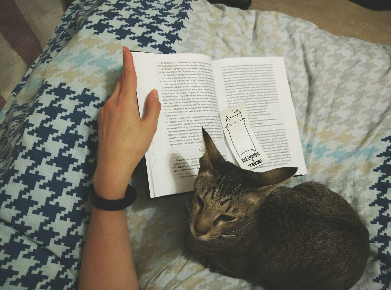 indoors, high angle view, domestic cat, book, one person, paper, pets, real people, home interior, one animal, table, human hand, holding, domestic animals, animal themes, mammal, close-up, learning, human body part, sitting, day, people