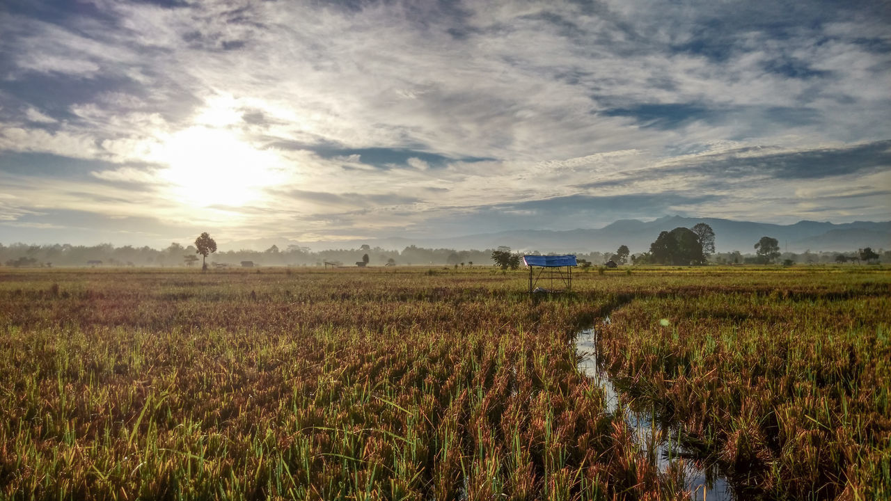Agriculture Beauty In Nature Cloud - Sky Day EyeEmNewHere Field Full Length Growth Hut Landscape Morning Morning Sky Morning Sun Nature No People Outdoors Paddy Field Sky Sunrise Tranquil Scene Tranquility Water