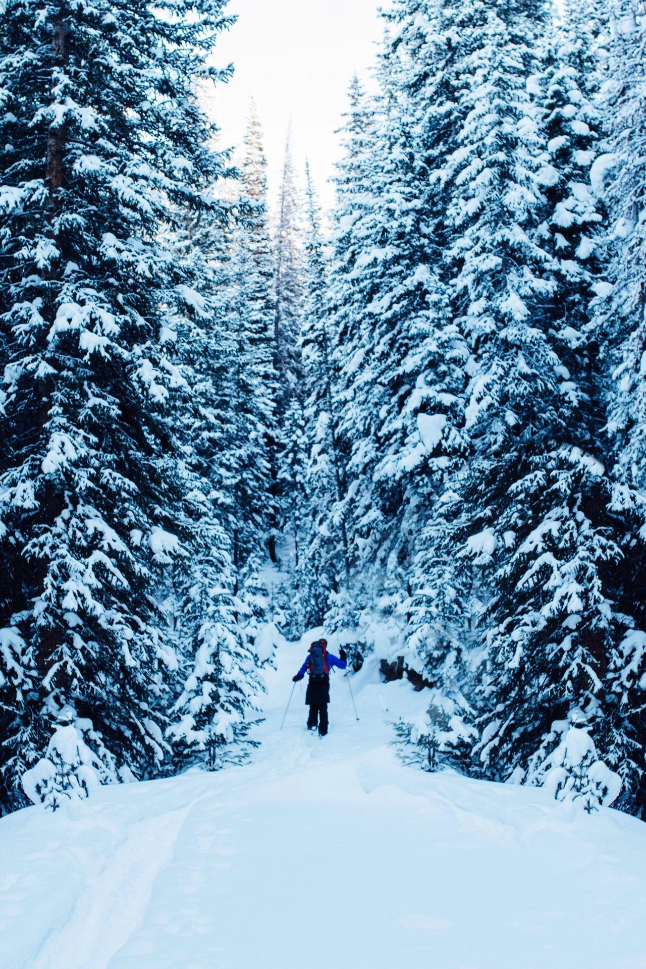 Winter Snow Frozen Landscape
