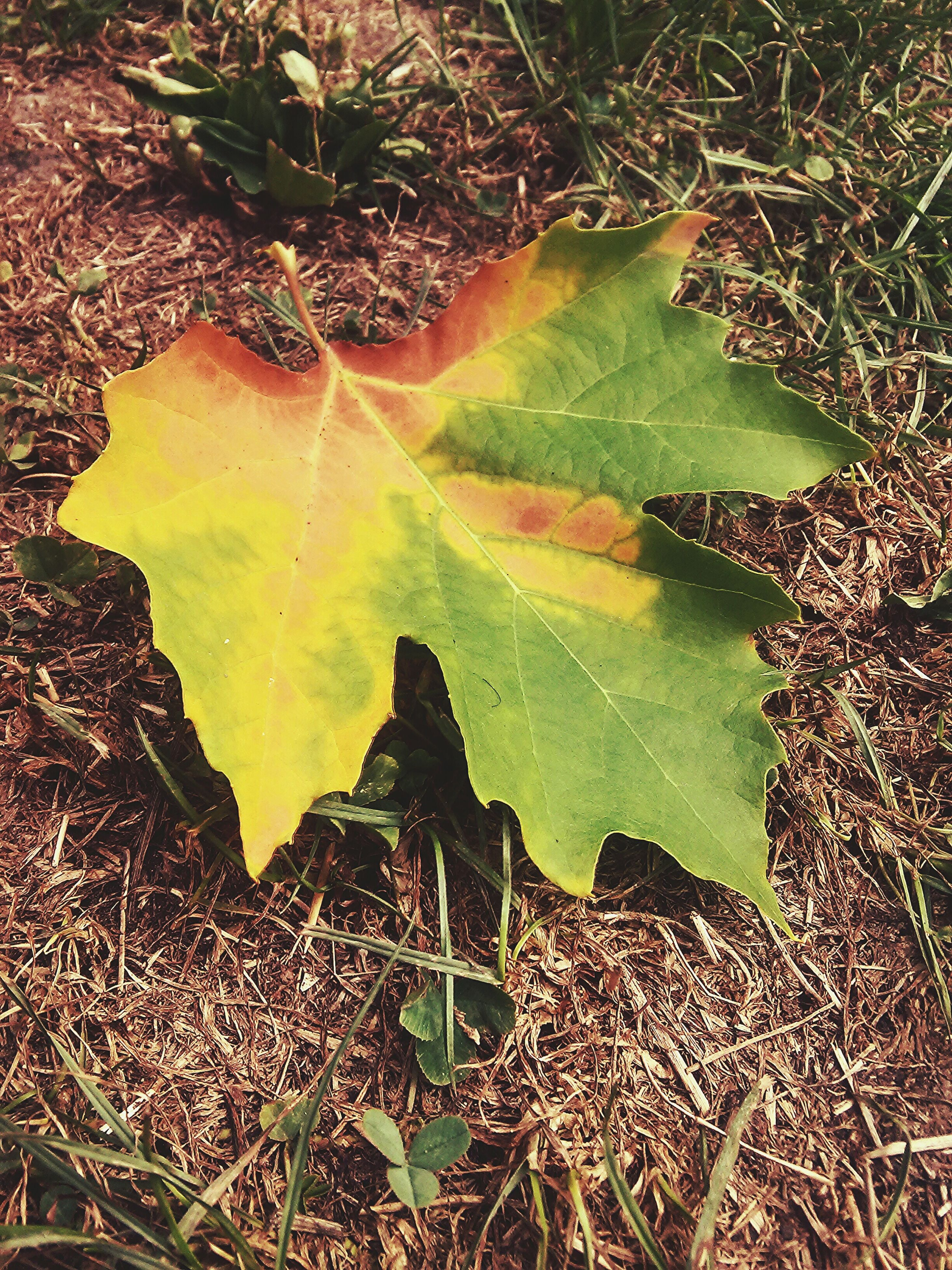 leaf, autumn, high angle view, change, dry, leaves, nature, fallen, season, grass, leaf vein, field, wet, natural pattern, close-up, water, maple leaf, tranquility, outdoors, day