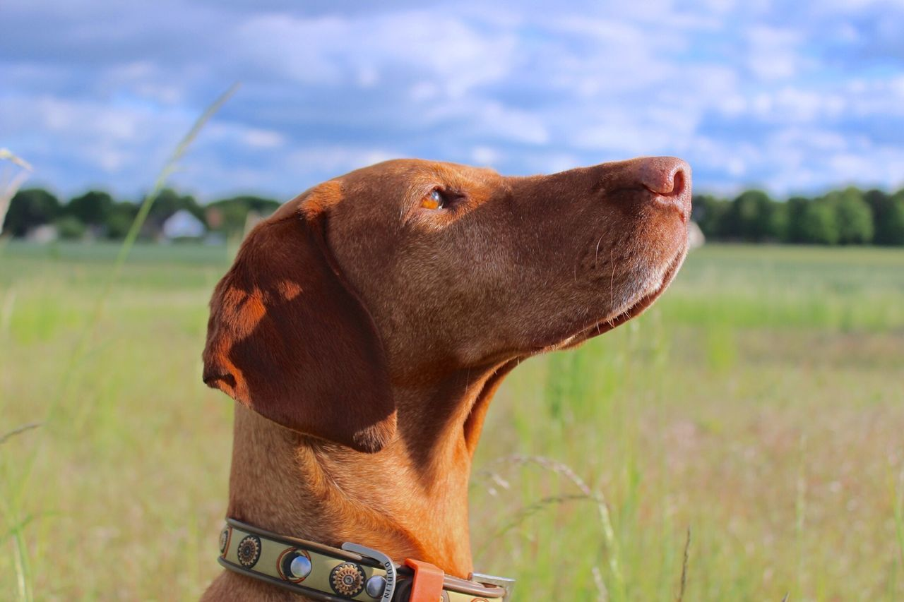 Beautiful stock photos of dogs, Animal, Concentrating, Dog, Domestic Animal