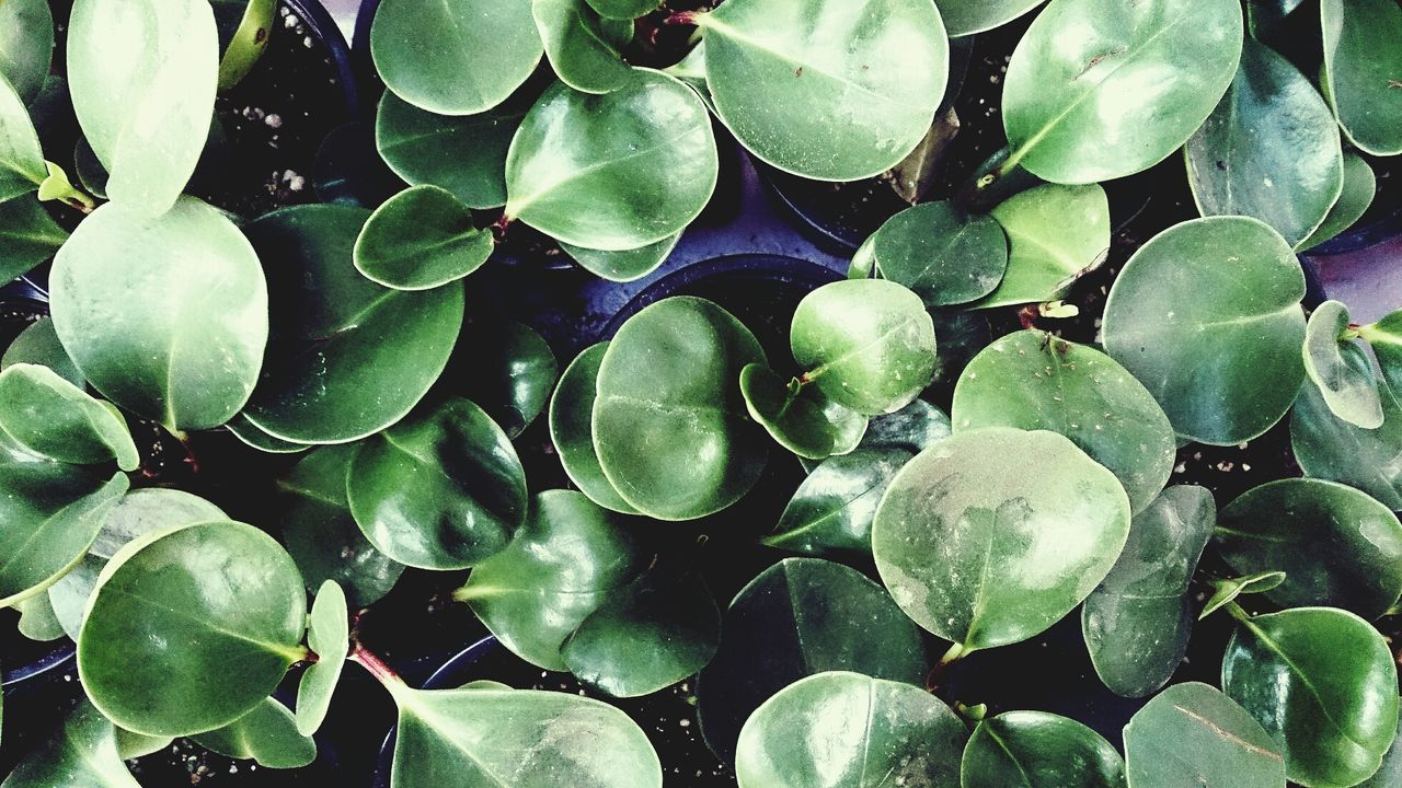 Detail shot of green leaves
