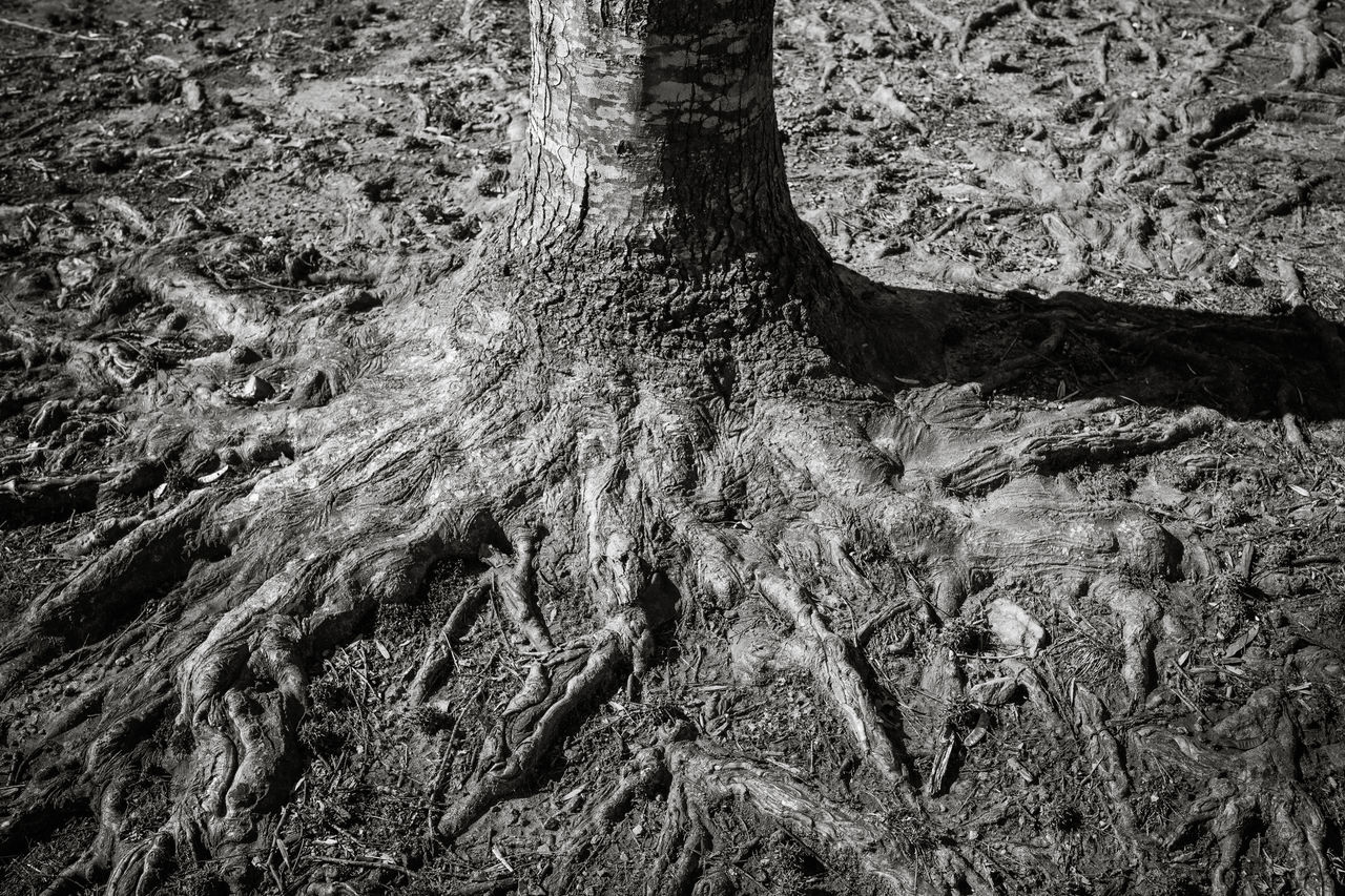 Backgrounds Beauty In Nature Blackandwhite Blackandwhite Photography Close-up Day Full Frame Knotted Wood Light And Shadow Nature No People Outdoors Roots Strong Textured  Textured  Textures And Surfaces Tranquility Tree Tree Trunk