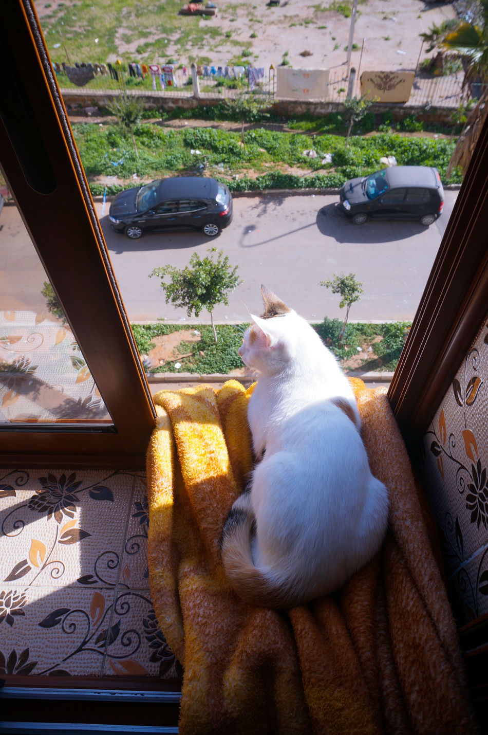 3rdFloor because she never listens! She's a Cat 🐈 Chilling Striking A Pose Like A Boss Seniora Not Afraid Heights Not Afraid Of Heights Yoga Session Sunbathing Feeling Awesome Feline Catitude Caturday Cats Cat Lovers Cat Lover Beautiful Beauty Window View Peeping Tom Curious Curious Cat Checking Out