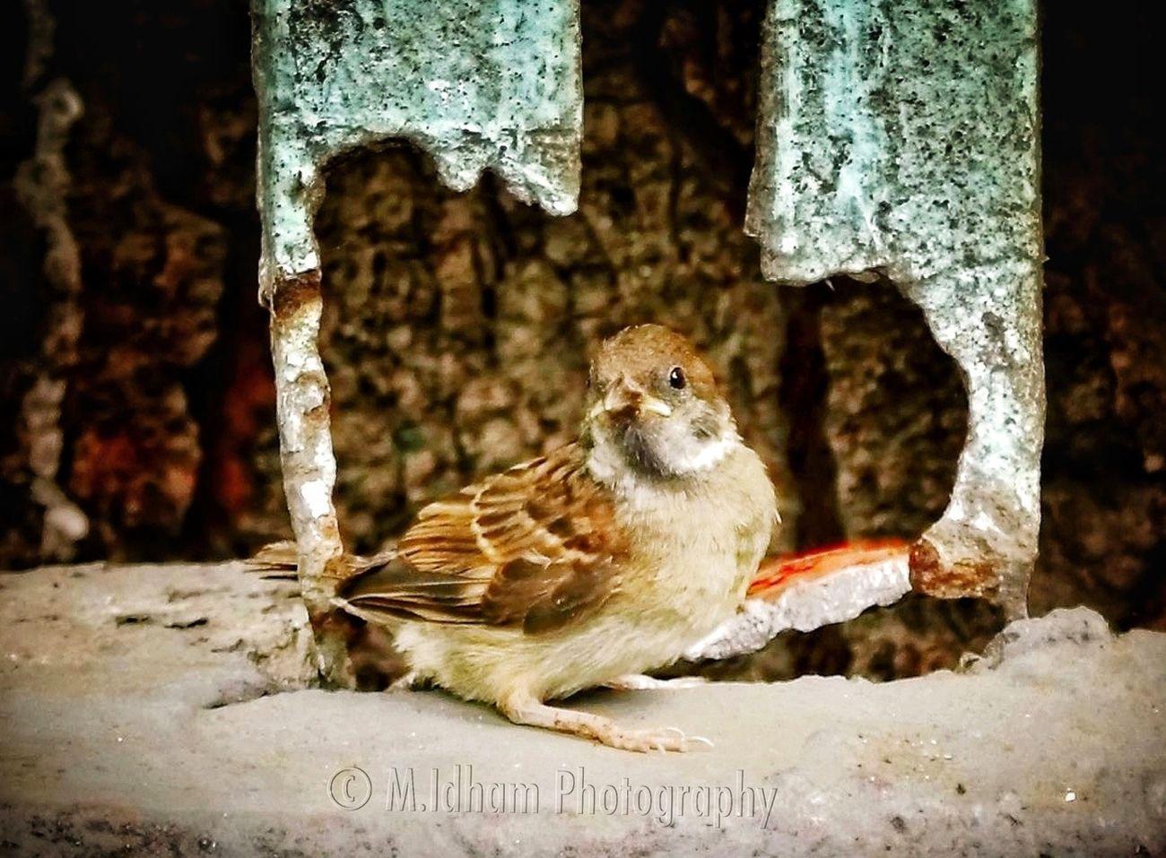Birds Wildlife EyeEm Best Shots Bird Photography