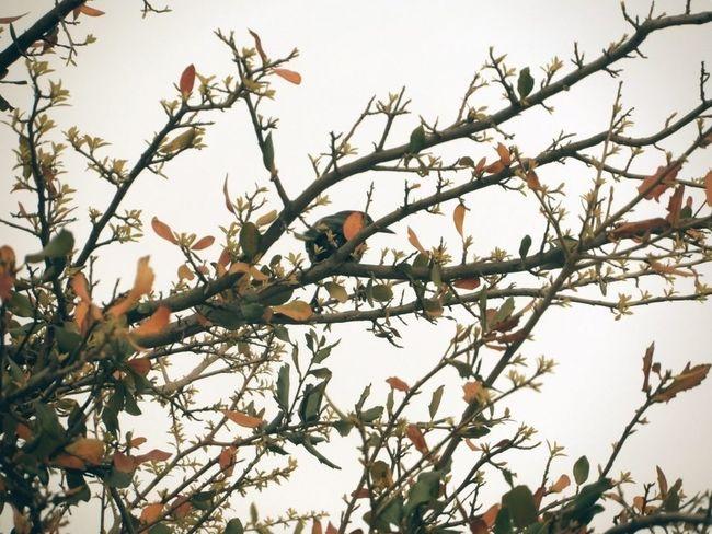 Taking Photos Nature_collection Enjoying Life Bird