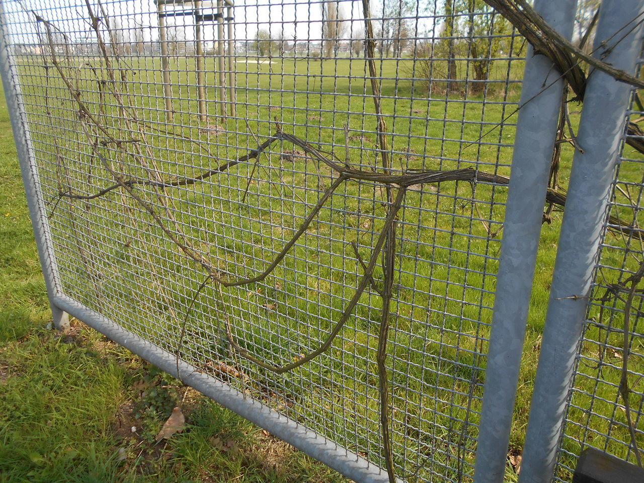 Beauty In Nature Day Fence Growth Nature Netting No People Outdoors Tranquility Tree