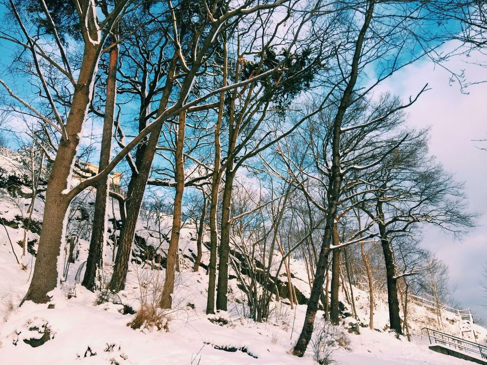 Nice weather today! Tree Snow Winter Bare Tree Cold Temperature Nature Sky Branch Outdoors Tranquility Beauty In Nature No People Day