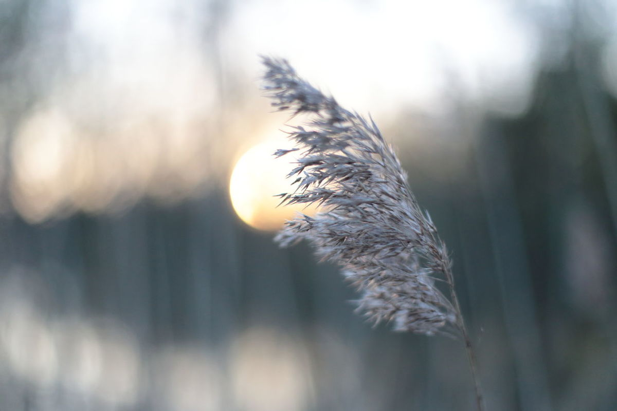 Beauty In Nature Close-up Dandelion Seed Day Focus On Foreground Fragility Nature No People Outdoors Plant Reed Sky Tranquility