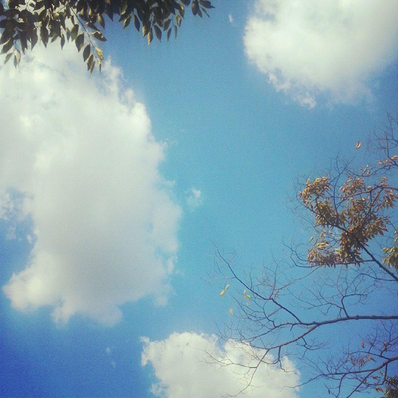 오늘 하늘 구름 두둥실 날씨좋다 안양예술공원