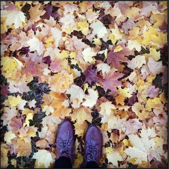 Fall Beautiful Colors