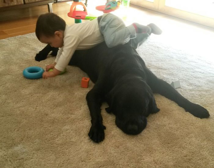 Childhood Pets Indoors  Baby Boy Baby And Dog Babylove Baby Playing With Dog