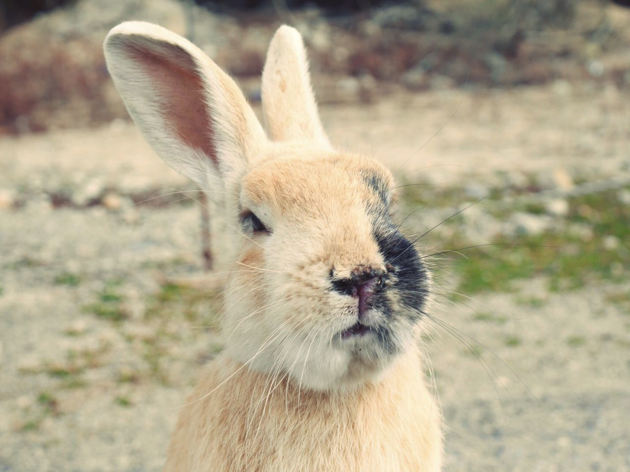 Beautiful Nature Nature_collection Nature Photography Nature Animal Themes Animals In The Wild Animals Animal Animal Wildlife Animal Head  Animal Photography Rabbit ❤️ Rabbit Rabbits Island Outdoors