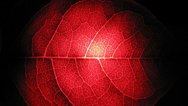 Check This Out Flashlight LED Sceleton Natural Chlorofyl Clorofil Neon Nephrite Streaks Malachite Emerald Clearance Leaflet Folium Foliage Flora Timetoexperiment Timesforexperimets All The Neon Lights Showcase: December Red Infrared Infra Pattern Pieces