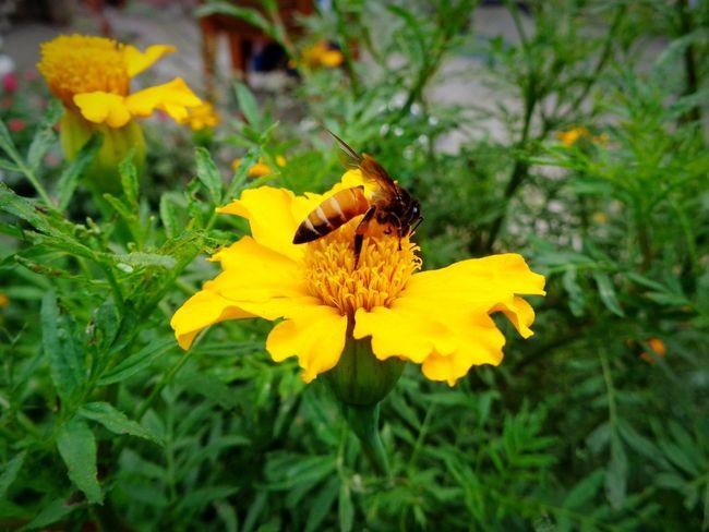 Bee 🐝 ,bee and flower, beautyfull combination