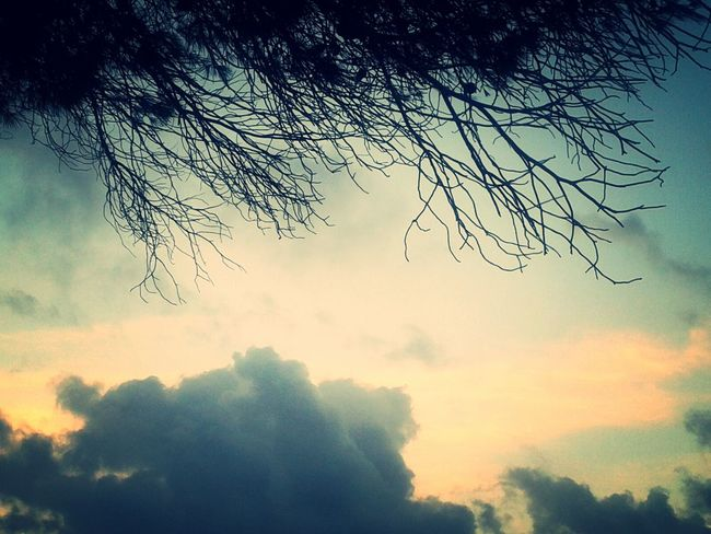 Cloudy morning Clouds And Sky Tree_collection  in Azzawya Libya