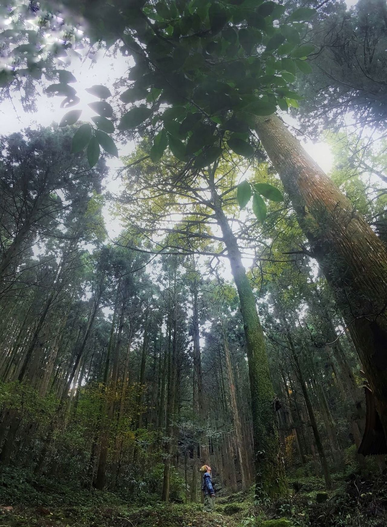 Break The Mold Tree Forest Nature Growth Low Angle View Tree Trunk Day Beauty In Nature Real People WoodLand Green Color Outdoors Tranquility Leisure Activity Hiking Scenics Men Lifestyles Adventure Bamboo - Plant