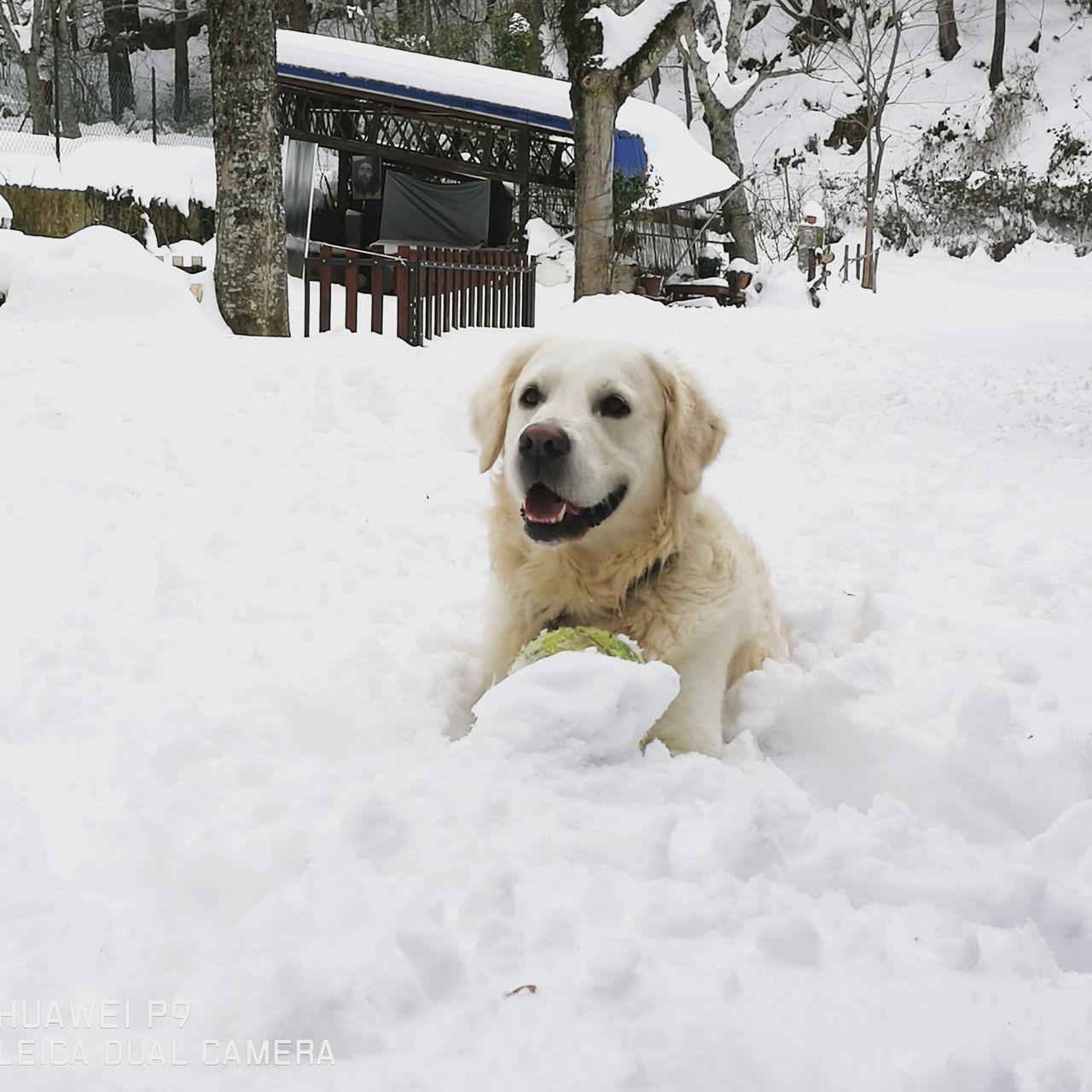 Snow Day Dogslife Mygolden Sempreingiro Sempreinsieme Premilcuore Happyday