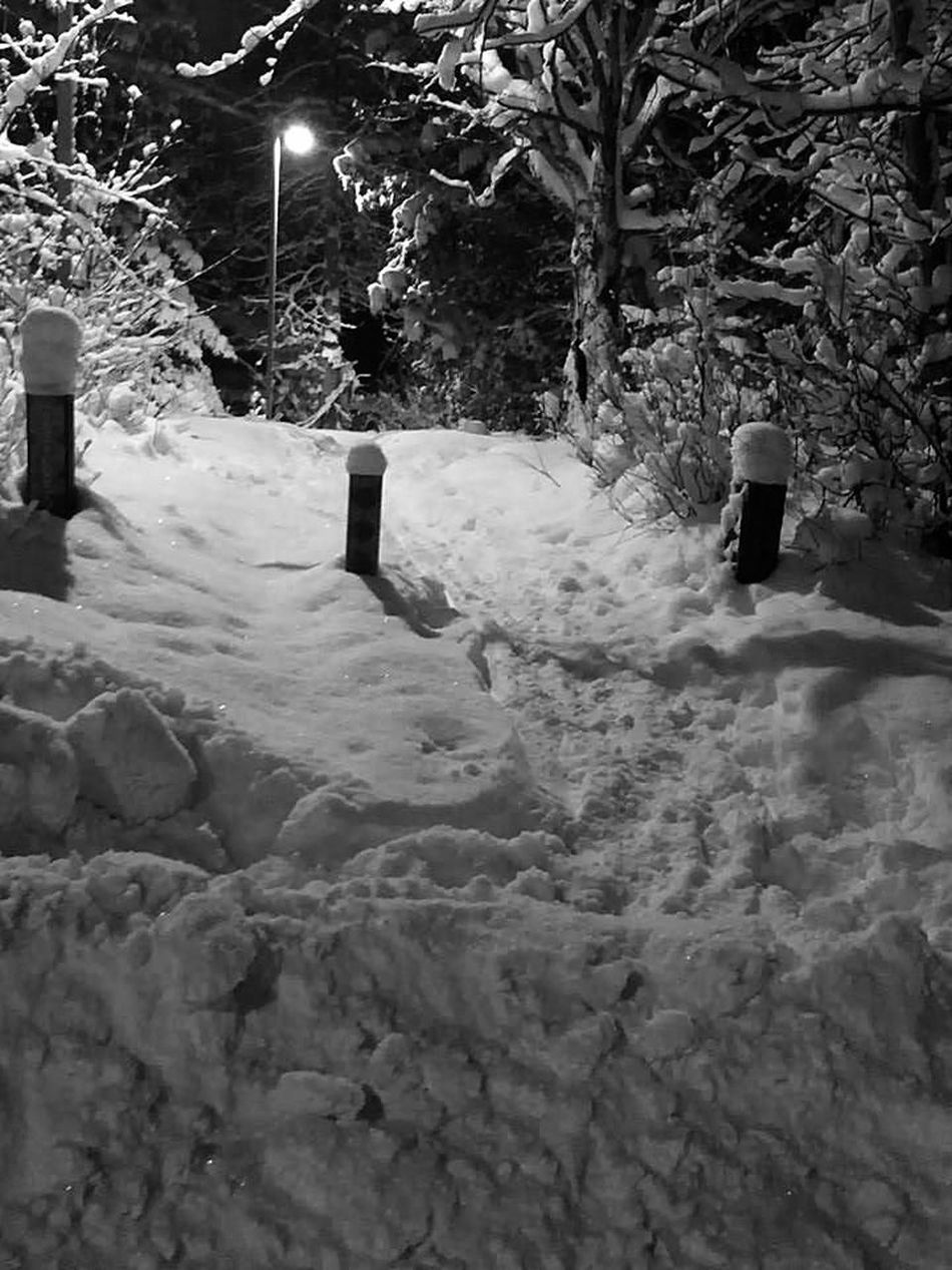 Debs favorite dog walk was a hike just to get past the solid burm out front. Taking Photos Blackandwhite Black And White Photography Black And White Scenery Snow Covered Evergreen Trees Anchorage Alaska Parks And Recreation Dog Walk still she loved it there... Fresh On Eyeem  Fresh On Eyeem  My Own Thing Found On The Roll My Year My View