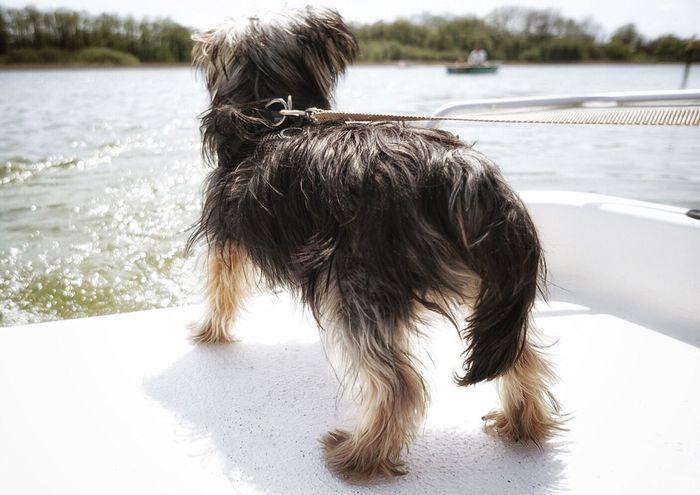Yorkshire Terrier Yorkie Wachhund Bootsfahrt Schaalsee Zarrentin