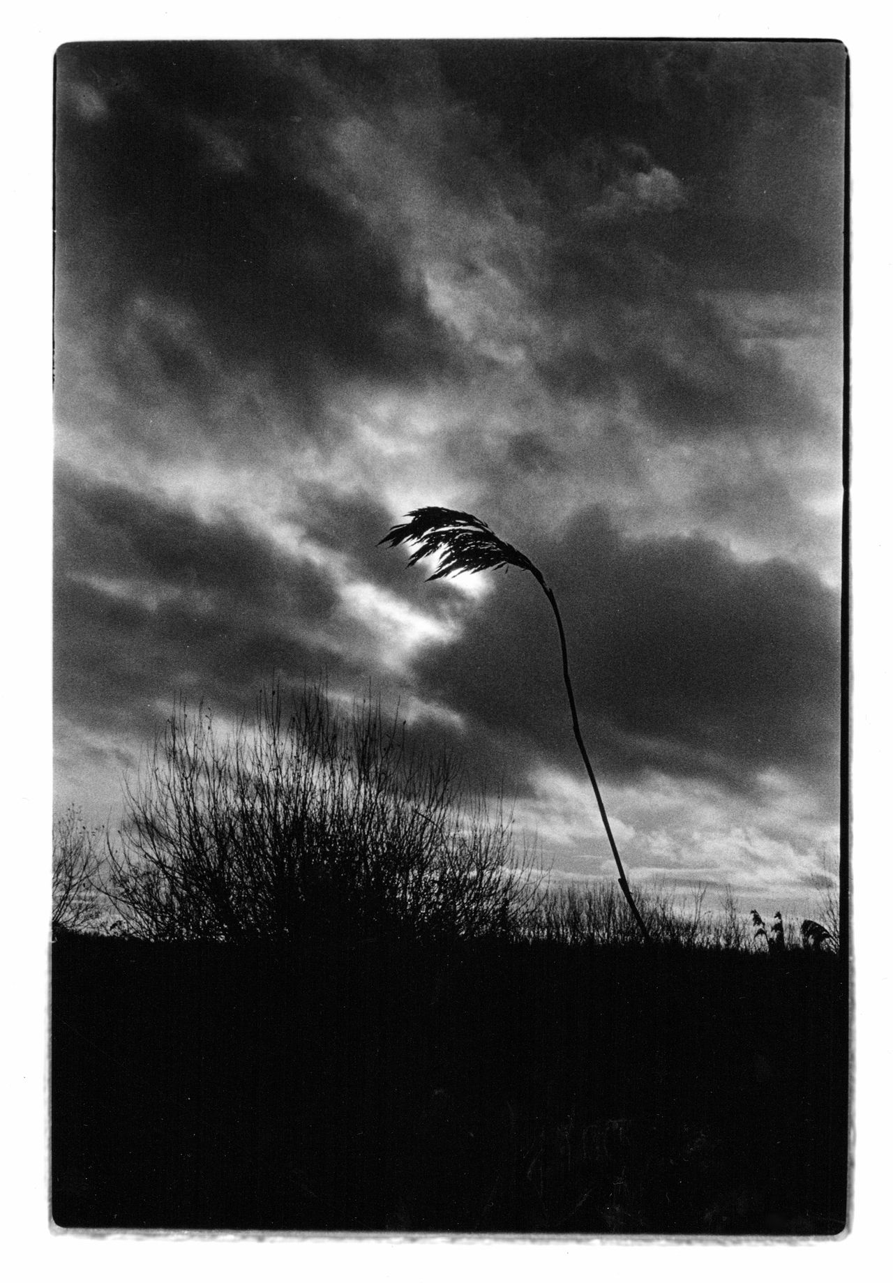 Analogue Beauty In Nature Blackandwhite Bristol Folk House Darkroom Chemistry Cloud - Sky Darkroom Film Photography Growth Konica EEmatic Deluxe Monochrome Nature No People Outdoors Plant Retro Silhouette Sky Somerset Levels Uk