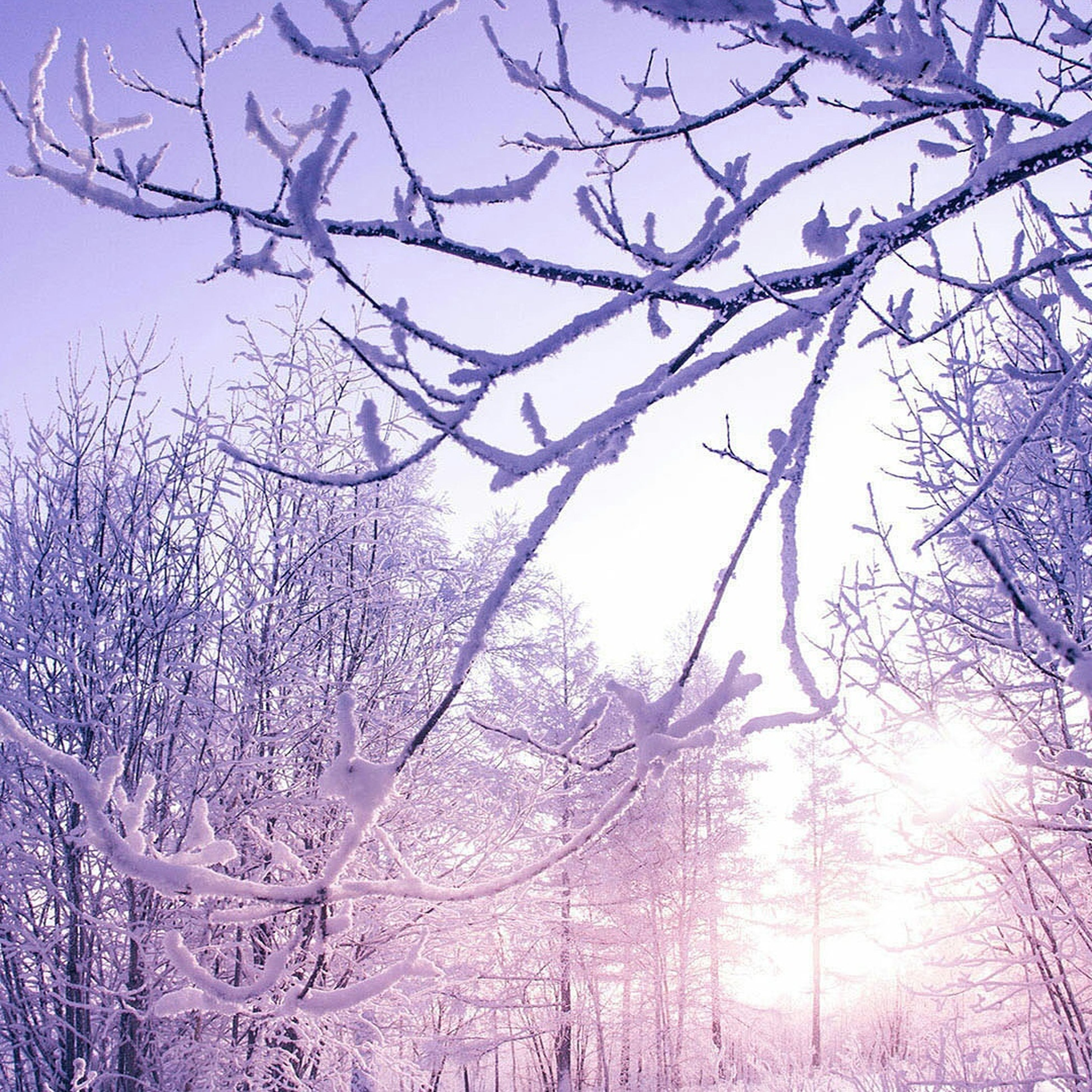 bare tree, tree, branch, beauty in nature, winter, nature, cold temperature, no people, snow, low angle view, tranquility, outdoors, scenics, day, sky, tranquil scene, growth, flower, freshness
