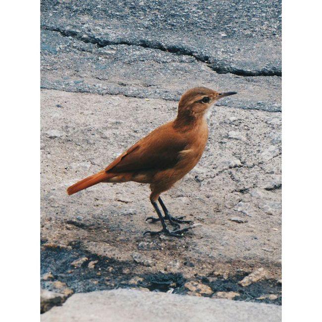 Bird Nature Naturelovers Nikon Green Ground Grey Vscobird Vsconature Vscophile Vscogreen City Beautiful Bestoftheday Instapicture Instabird Instagreen Instanature Instaart Natureza Passaro