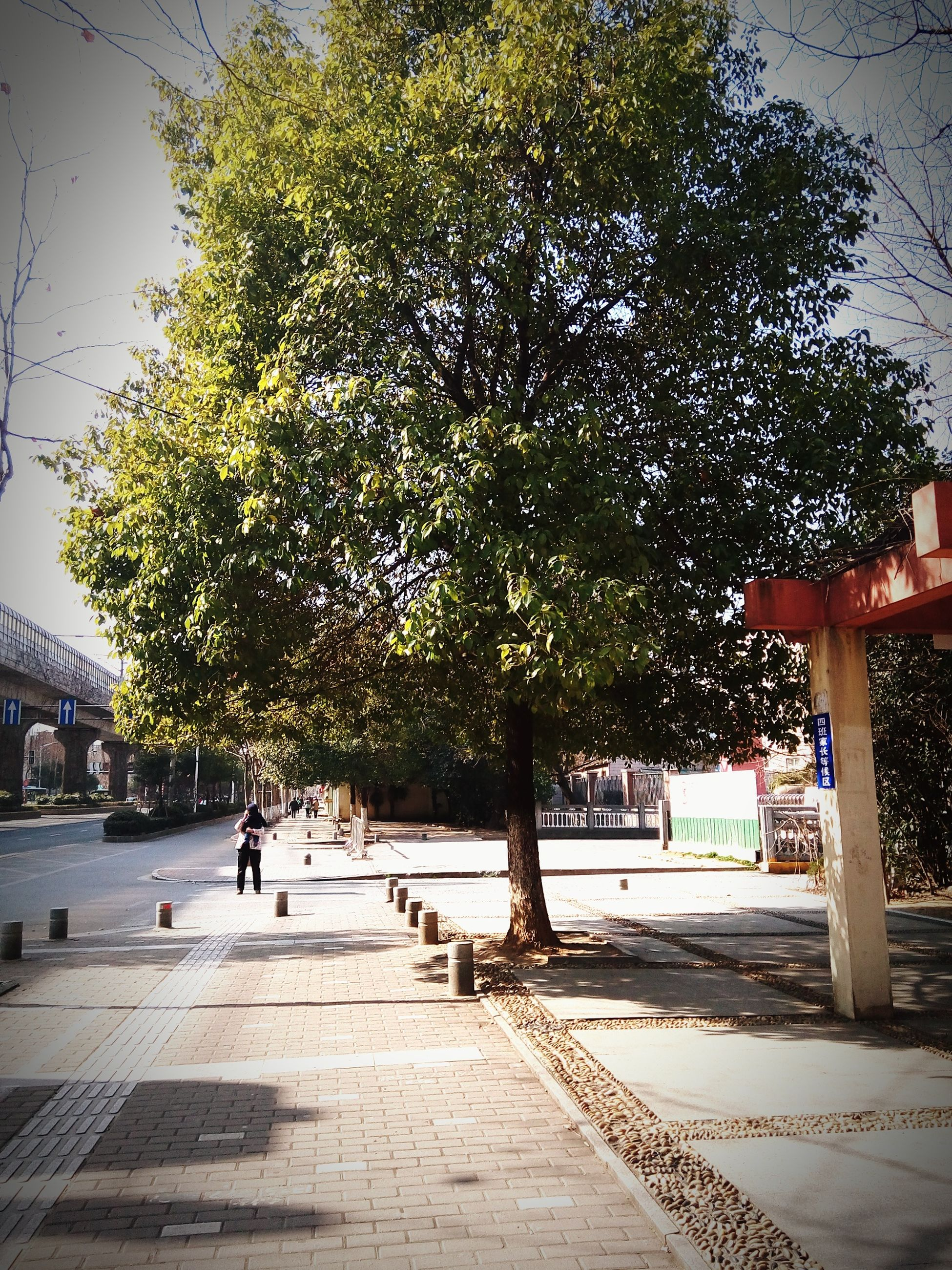 tree, growth, incidental people, footpath, bench, sidewalk, the way forward, built structure, sunlight, park - man made space, shadow, street, city, building exterior, architecture, outdoors, day, person, men