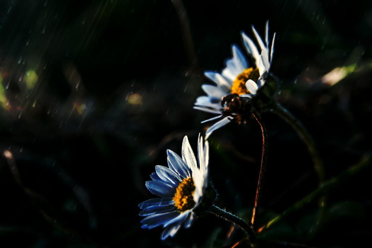 Blooming Flower Blooming In Spring YellowWhite