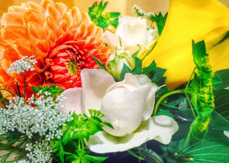 Frowers iphone6plus