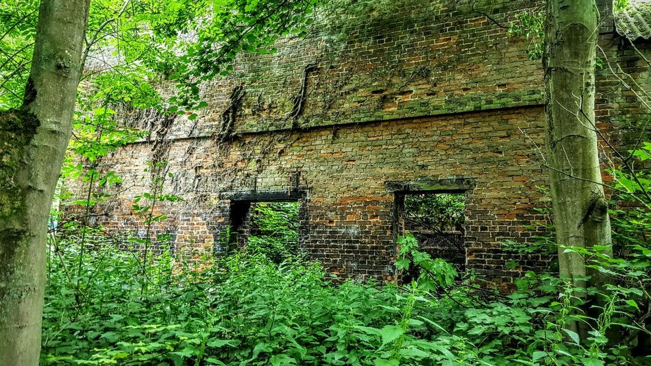 Outside Inside Nature Reclaiming Forest Abandoned Buildings Long Ago Trees Greenery Love This Place @ Aston Cheshire