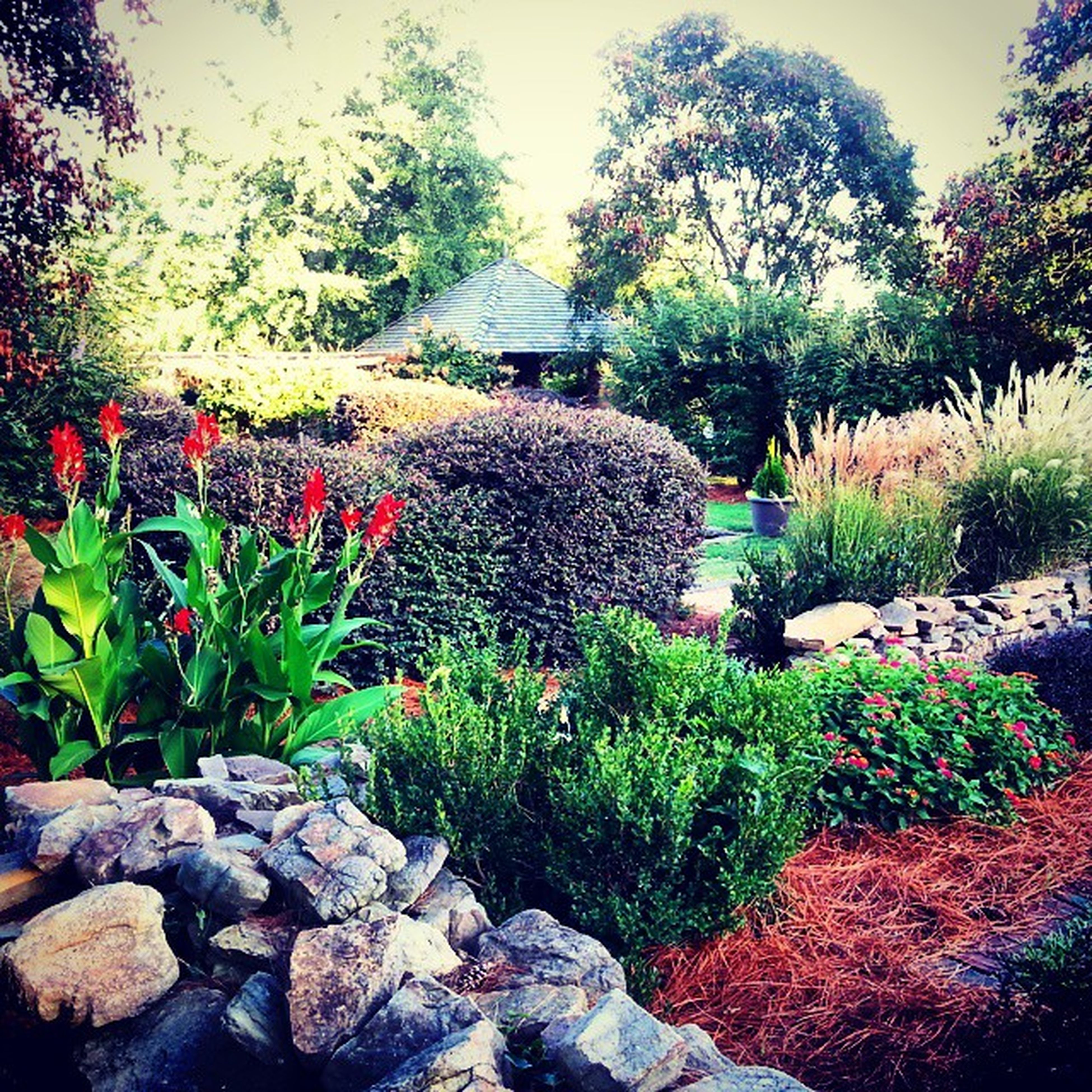 Lavendermountain Houseofdreams Gorgeousgardens