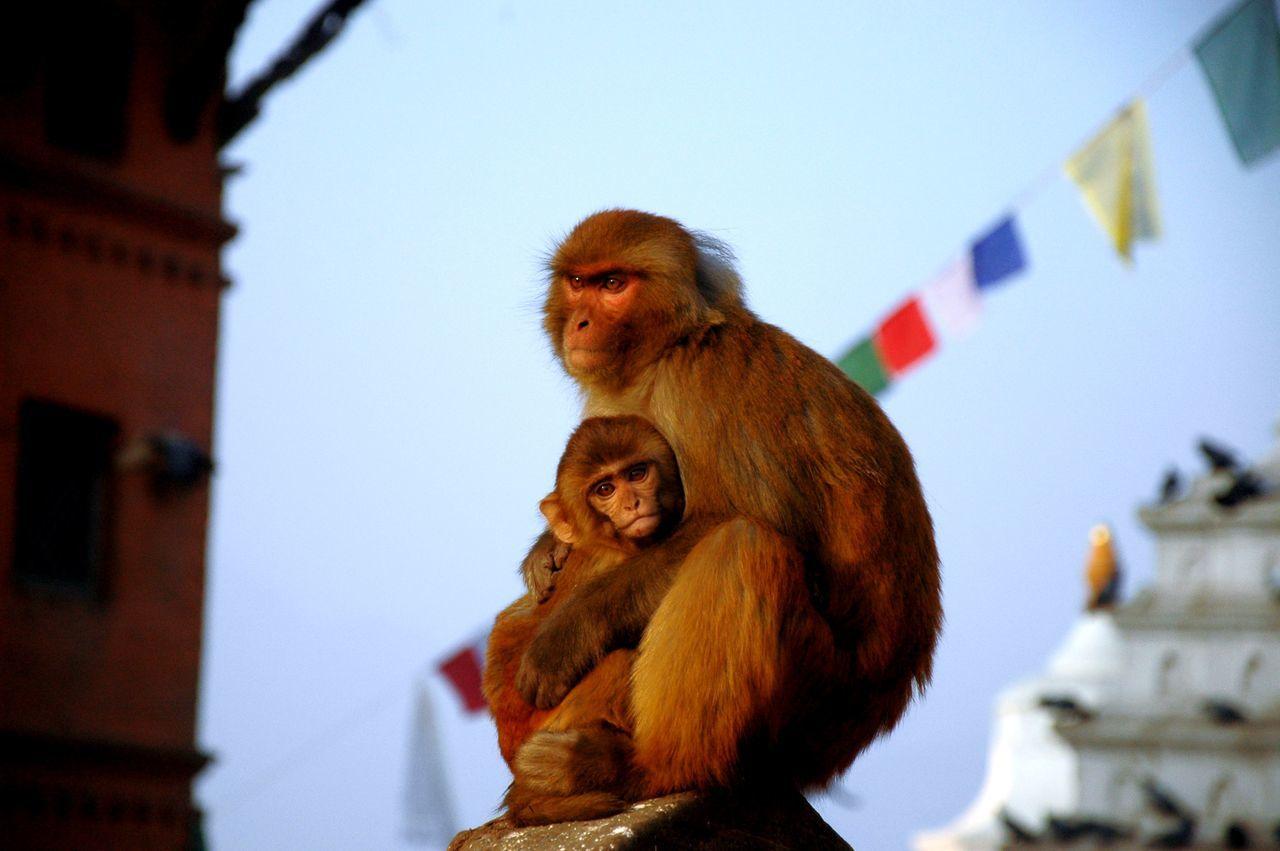 Blue Close-up Hugs Kathmandu, Nepal Love Low Angle View Mammal Monkey Motherlove No People Outdoors Sky