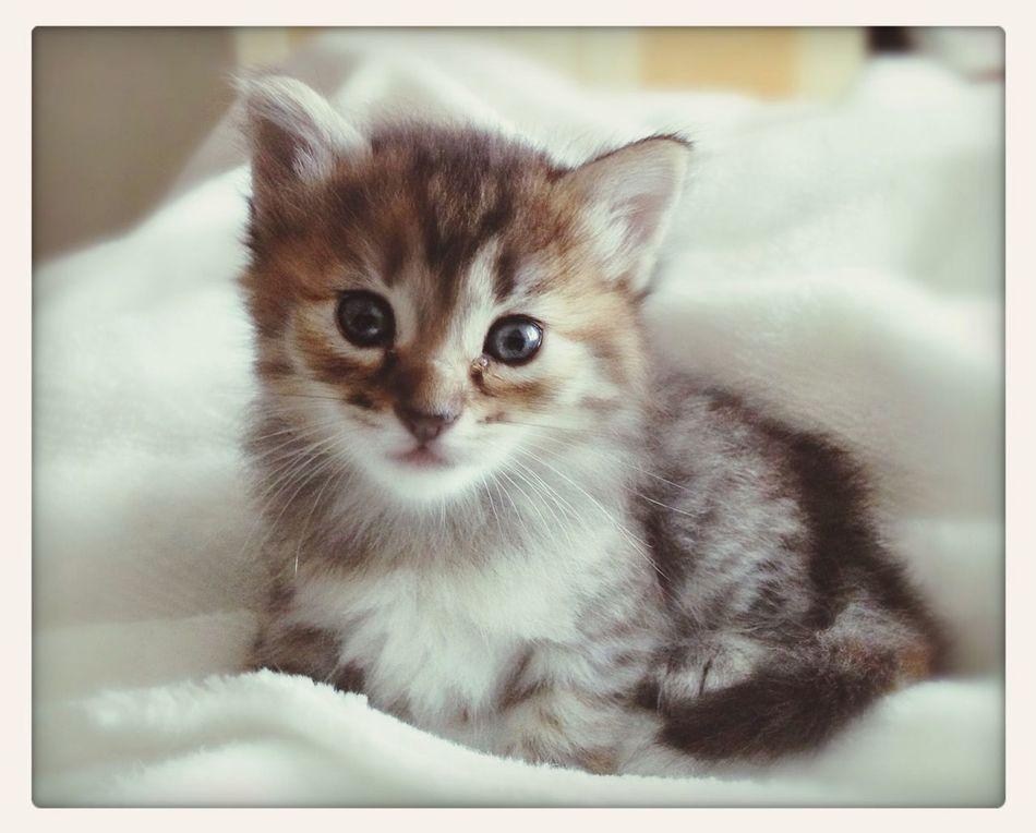 Cats Gato Home Tizayuca