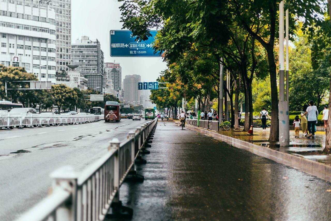 Autumn My Traveling Photography My Street Photography From My Point Of View Streetphotographyer Streetphotography Street Taking Photos Tree City Road Rainy Days City Life The Way Forward Traffic Architecture Treelined