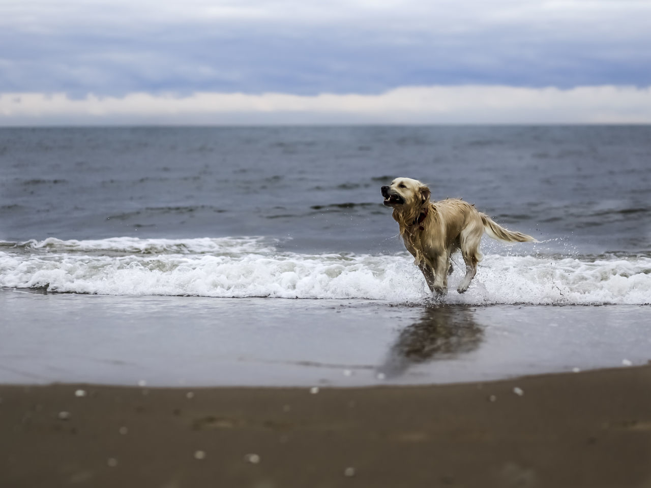 dog, one animal, water, pets, domestic animals, nature, mammal, animal themes, outdoors, sea, day, beach, no people, sky, beauty in nature