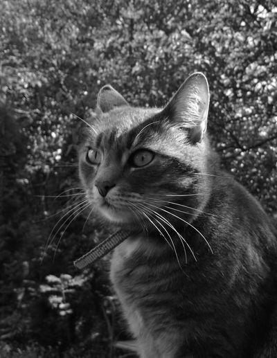Cat Black And White Feline Contrast