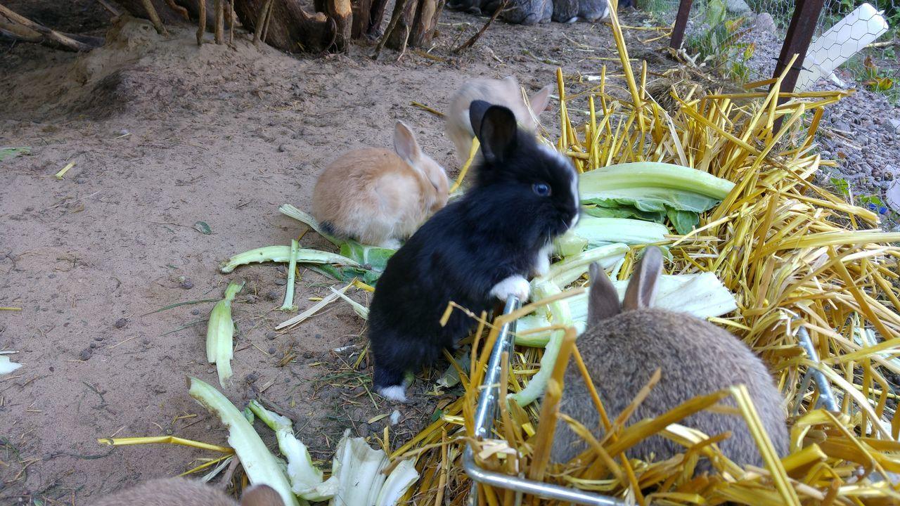No People nofilternoeditNofilters Animal Themes Pets Animal Outdoors Hasenbabys Gehege Haustiere Hasenglück Food <3