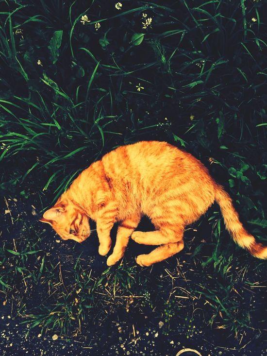 Cat Animals