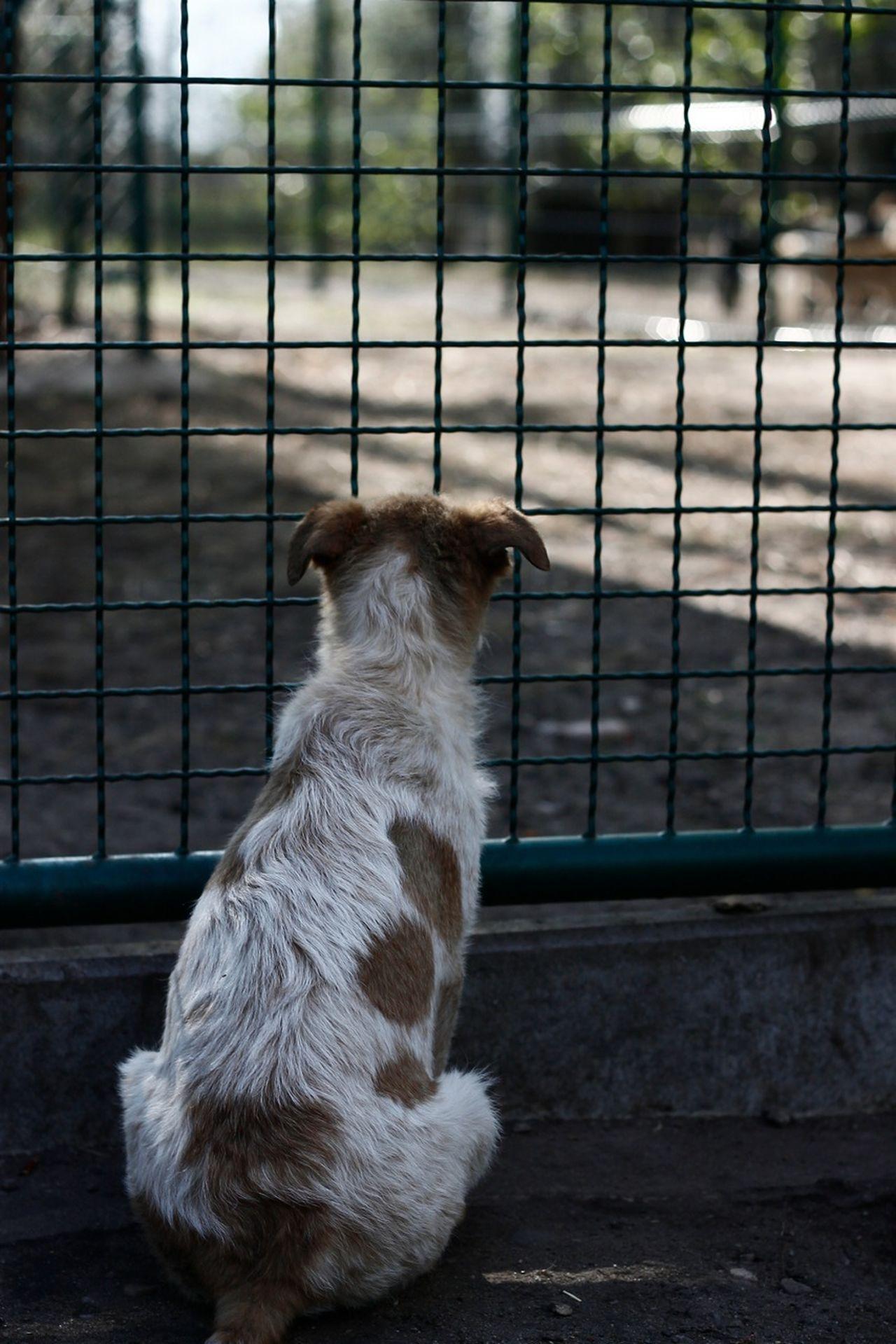 please donate to Tierheim am See Animals Tierheimamsee Tierheim
